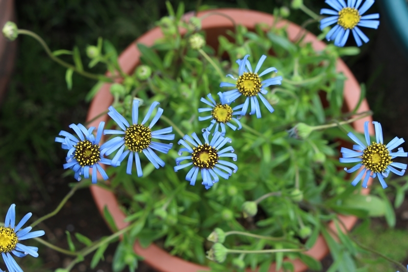 f0165677_20041596.jpg
