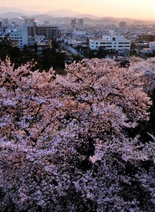 今は桜満開の久松公園......撮影は仁風閣を...._b0194185_22552340.jpg