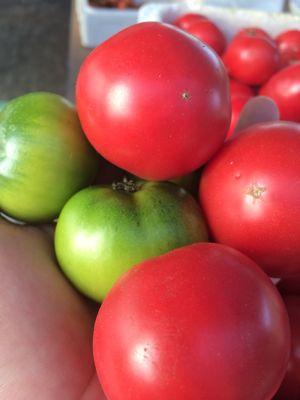 トマトの美味さ!_a0163896_1325256.jpg