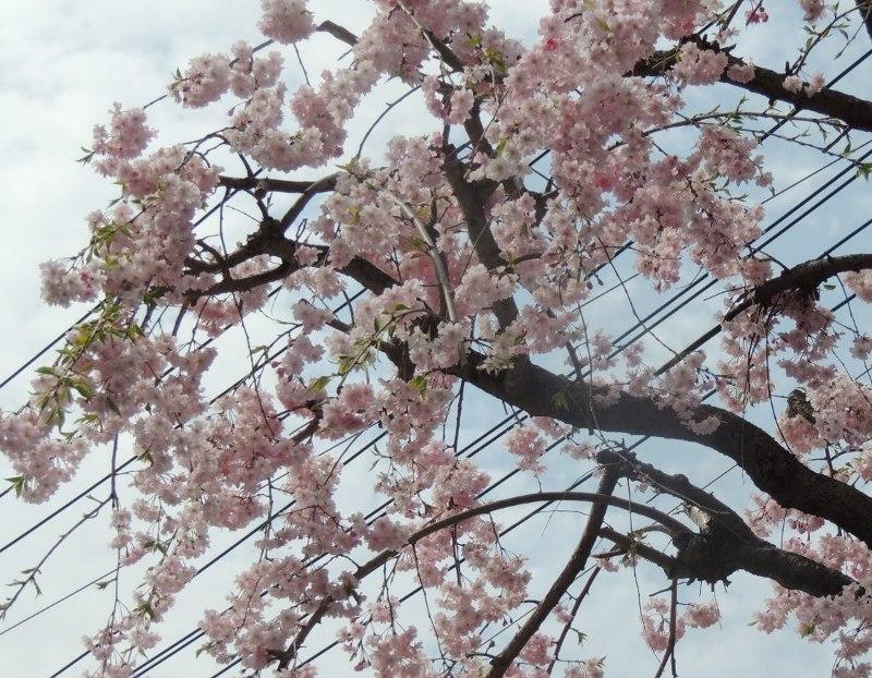 4月7日_e0094102_12195273.jpg
