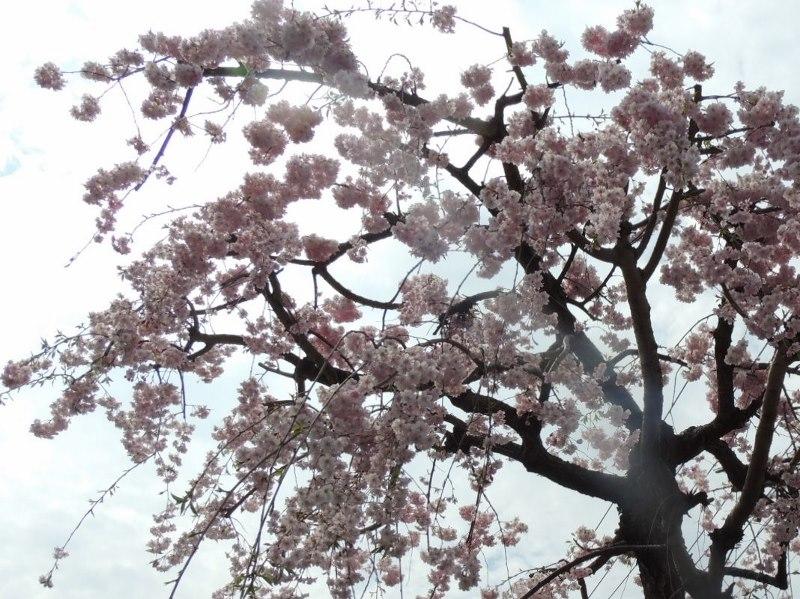 4月7日_e0094102_12204627.jpg