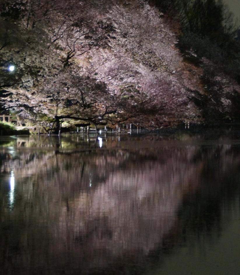 Sakura in the night water_f0006713_22404649.jpg
