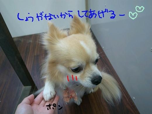 b0130018_01514881.jpg