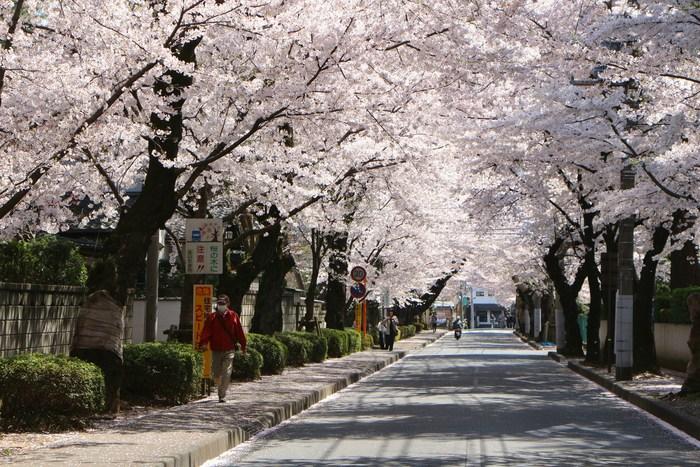 '15年 桜を楽しだ日々_d0150720_10555188.jpg