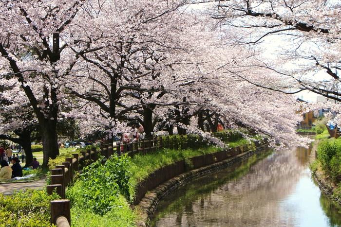 '15年 桜を楽しだ日々_d0150720_10584779.jpg