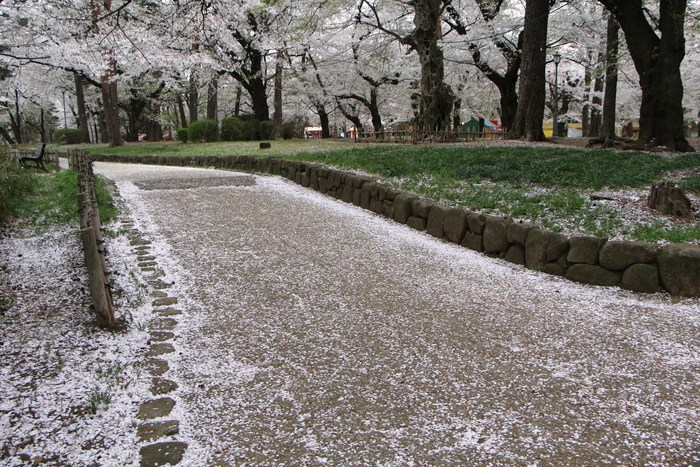 '15年 桜を楽しだ日々_d0150720_11145921.jpg
