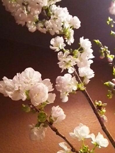 八重桜🌸_c0119937_17423371.jpg