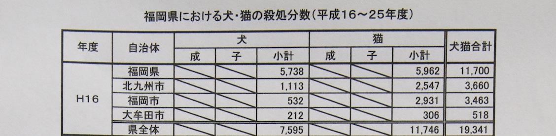 福岡県における犬猫殺処分_d0073743_1347832.jpg