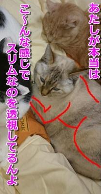 b0151748_13584451.jpg