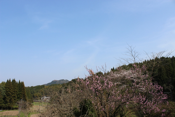 桜..さくら..サクラ❀_a0174458_0192383.jpg