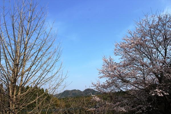 桜..さくら..サクラ❀_a0174458_0301842.jpg