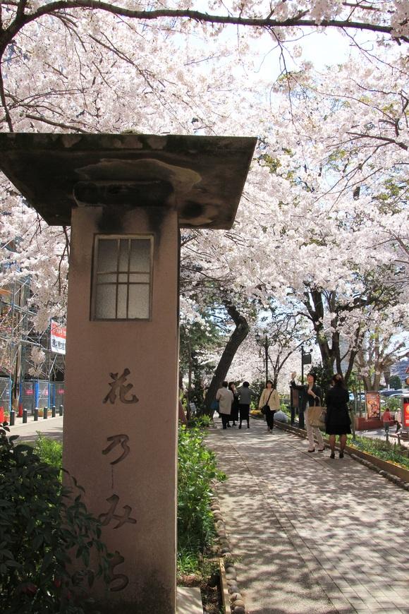 阪急 宝塚 桜。_d0202264_1740454.jpg