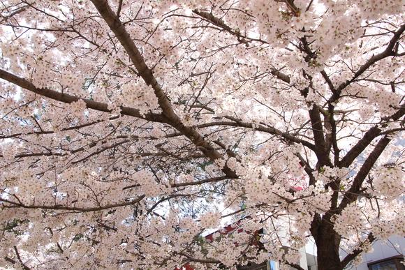 花のみち 阪急宝塚。_d0202264_17492325.jpg