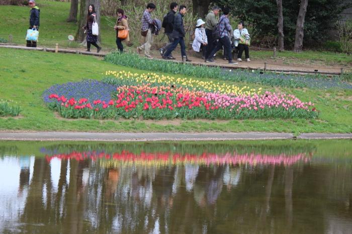 2015年 昭和記念公園の桜とチューリップ_a0180279_15583991.jpg