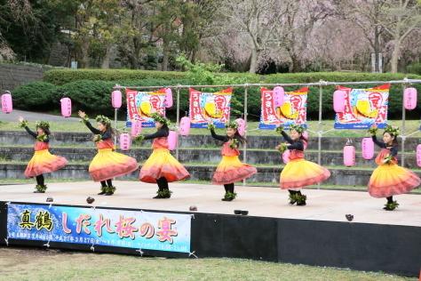 2015年 「しだれ桜の宴」_b0135882_20431152.jpg