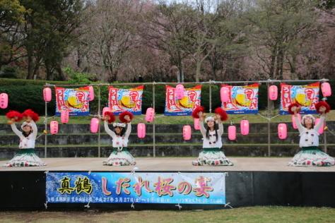 2015年 「しだれ桜の宴」_b0135882_21214546.jpg