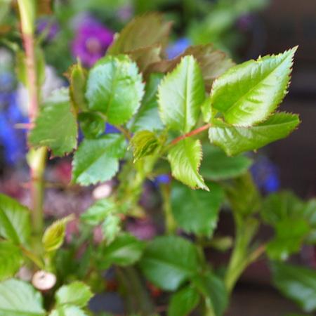 室内の葉っぱと外の葉っぱ_a0292194_16225134.jpg