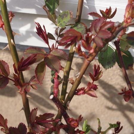 室内の葉っぱと外の葉っぱ_a0292194_1626763.jpg