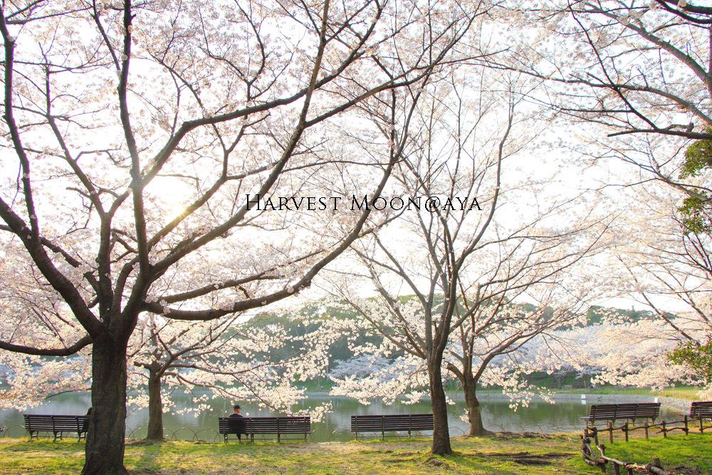 伸桜_b0208495_22463727.jpg