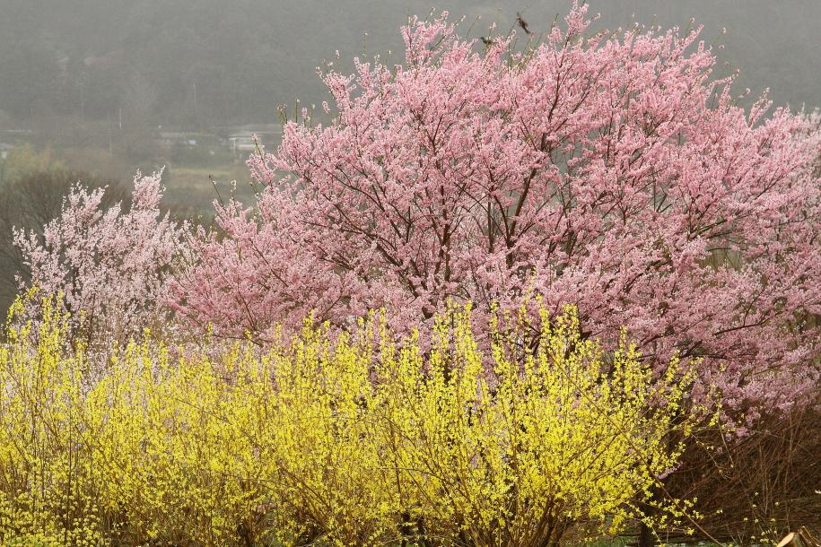 山里の黄色桃色_b0190710_734490.jpg