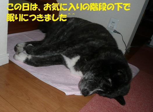 f0121712_16533223.jpg