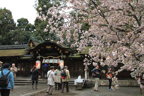 平野神社 2015さくら情報35_e0048413_2211428.jpg
