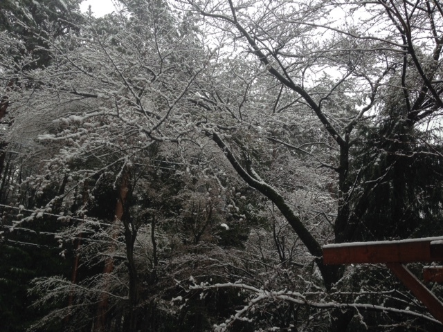 桜隠し_d0161933_10531634.jpg