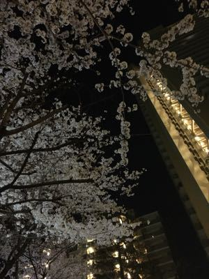 4月専科 桜の厚焼きマフィン_e0214541_1827523.jpg