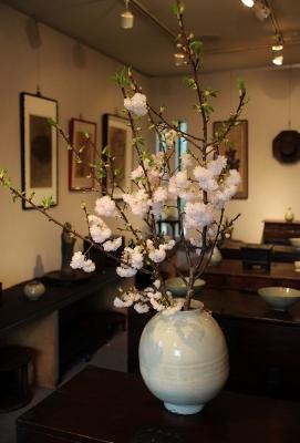 花だより 淡い色の八重桜_a0279848_14493586.jpg