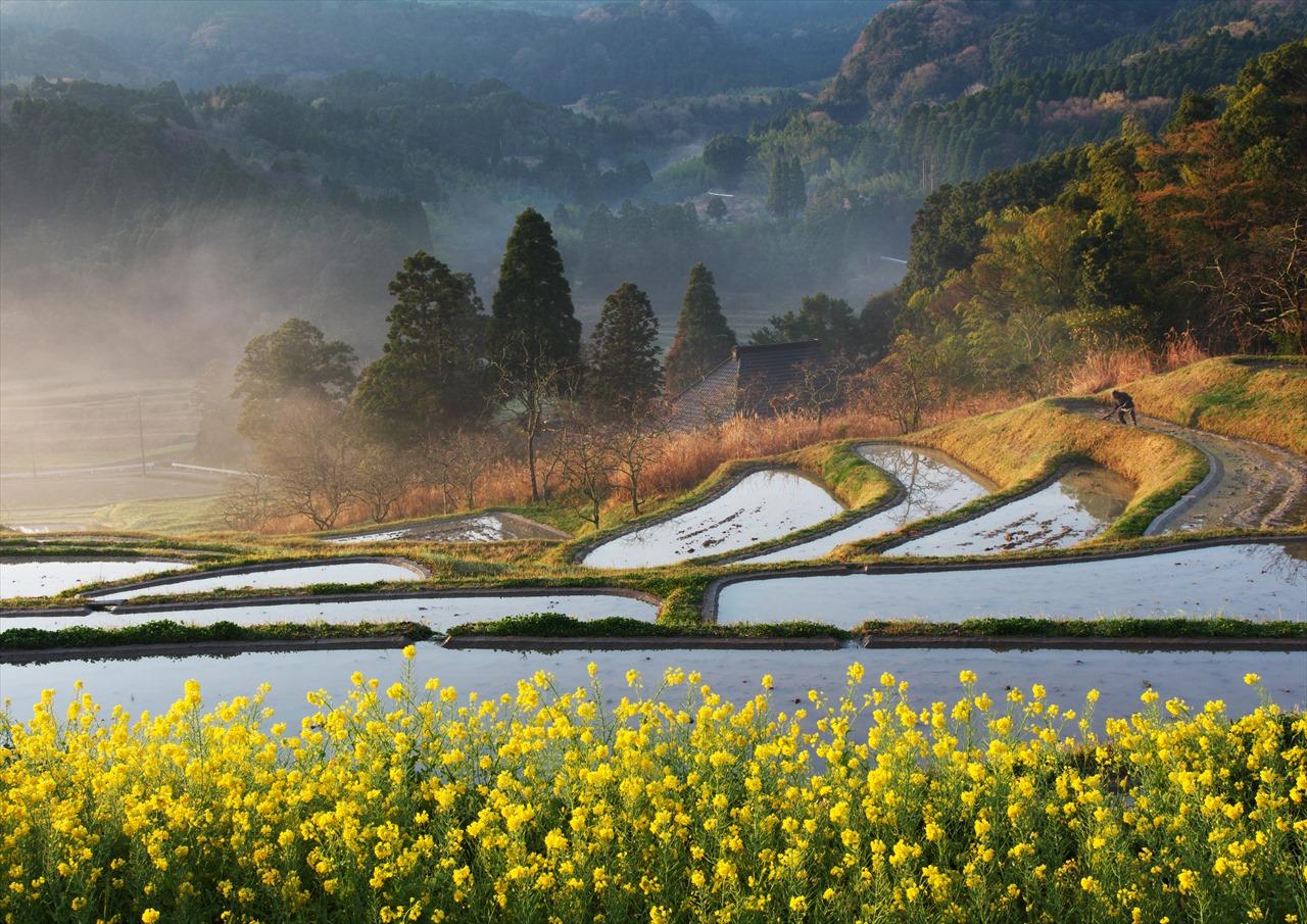 梅の花の咲く頃 ~仲春の大山千枚田~ 5_f0018464_2035761.jpg
