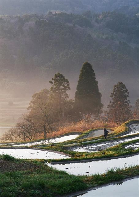 梅の花の咲く頃 ~仲春の大山千枚田~ 5_f0018464_209322.jpg