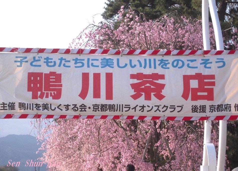 半木の桜が満開 2015年4月8日_a0164068_18323639.jpg