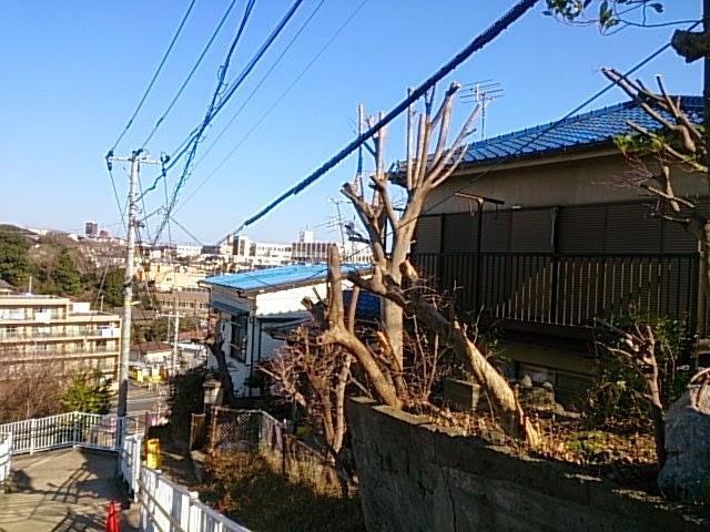 4/7 最近・・_e0029584_10262840.jpg