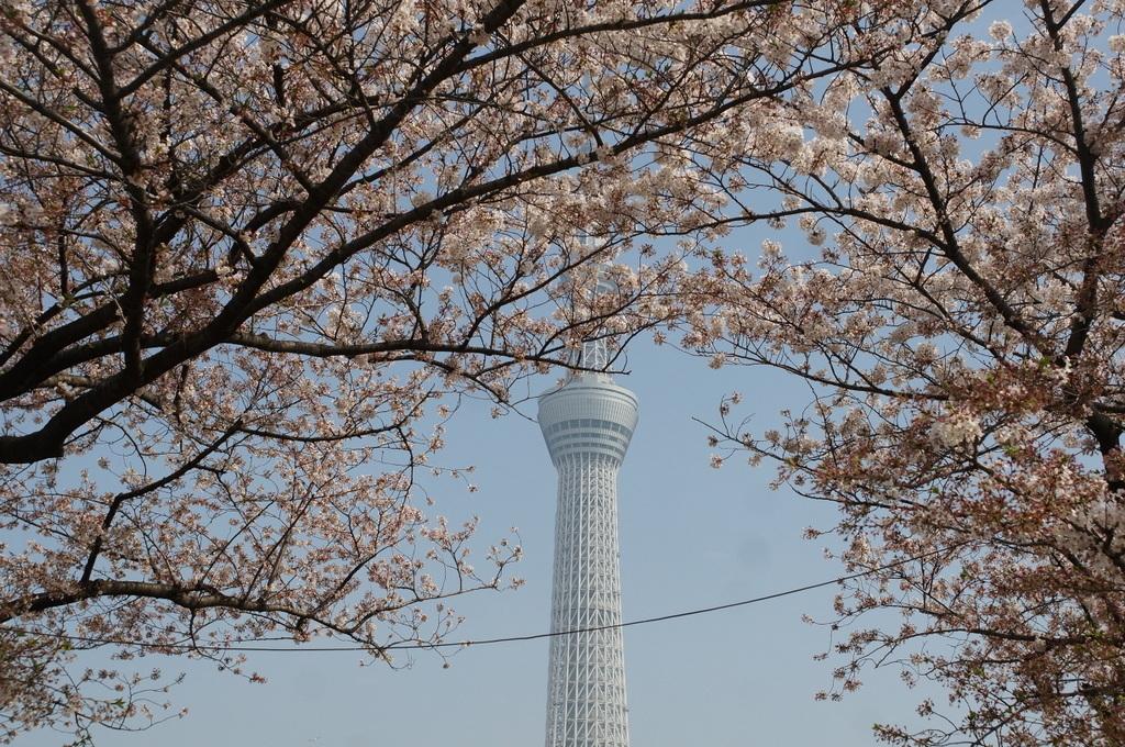 浅草散歩。_c0180686_10214812.jpg