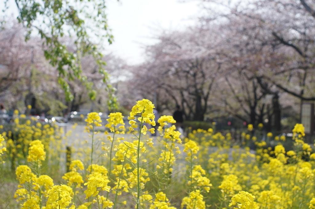 浅草散歩。_c0180686_10221879.jpg
