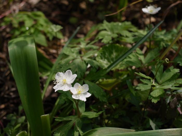 4月はじめの庭日和_e0276411_23265571.jpg
