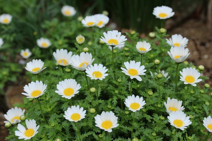 春 庭の花々_d0150720_16491242.jpg
