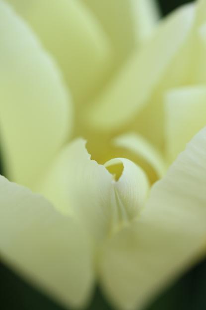 春 庭の花々_d0150720_16533726.jpg