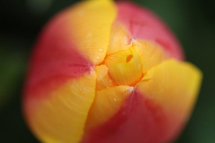 春 庭の花々_d0150720_16534859.jpg