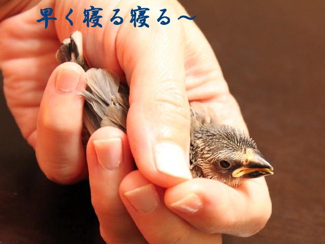 c0365734_2012110.jpg