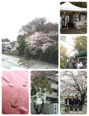 桜 *_c0131839_0554743.jpg