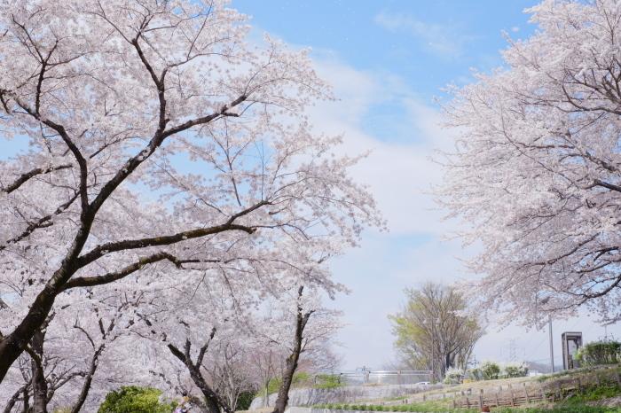 春の津久井湖城山公園_c0001744_14484774.jpg