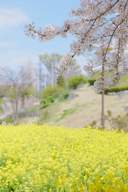 春の津久井湖城山公園_c0001744_15140898.jpg