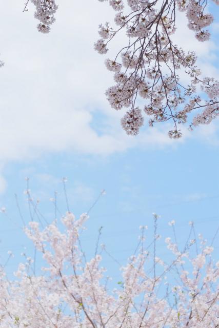 春の津久井湖城山公園_c0001744_15141825.jpg