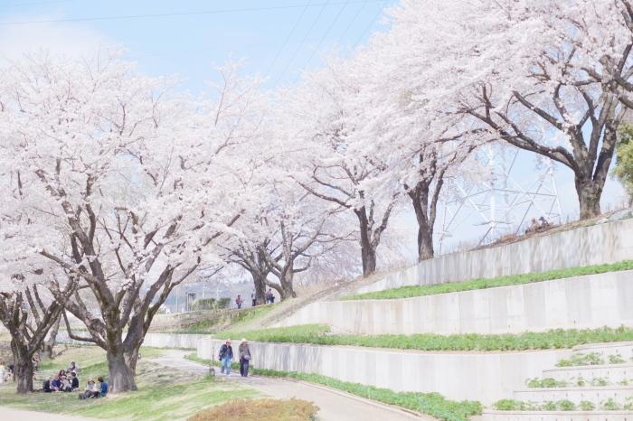 春の津久井湖城山公園_c0001744_15241033.jpg
