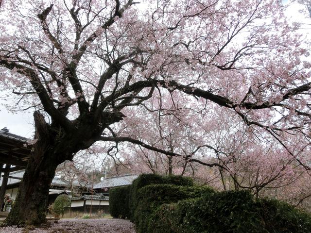 我が町シリーズ日野春(桜)_f0019247_23241100.jpg