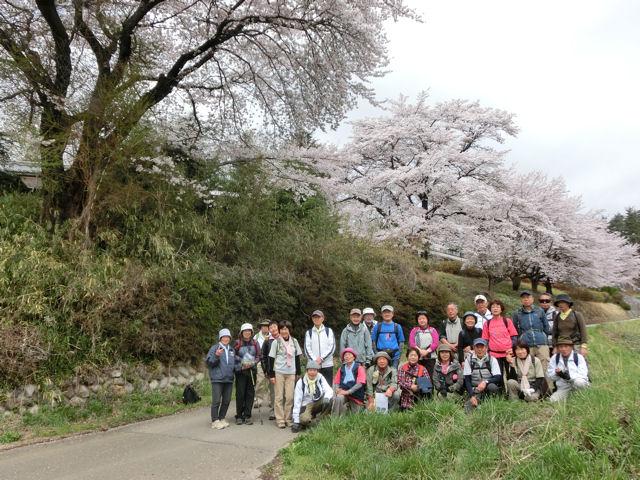 我が町シリーズ日野春(桜)_f0019247_23292218.jpg