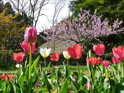 4月8日(水)KKTくまもと県民テレビ「テレビタミン」生中継の裏話!!その1_a0254656_17553477.jpg