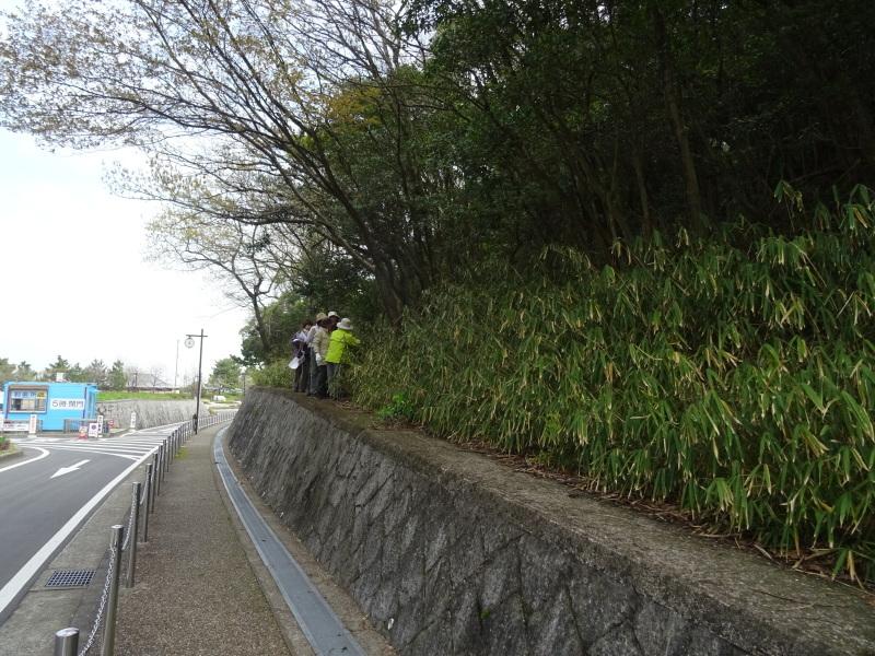 植物観察会 & 「子どもの日フェスティバル」の内容検討     by     (TATE-misaki)_c0108460_19490539.jpg