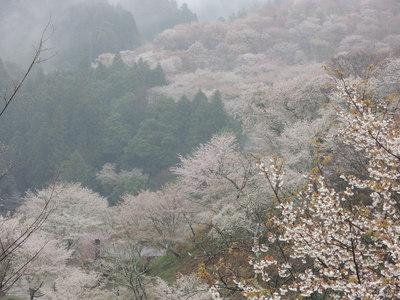 吉野へ_b0252363_10372491.jpg
